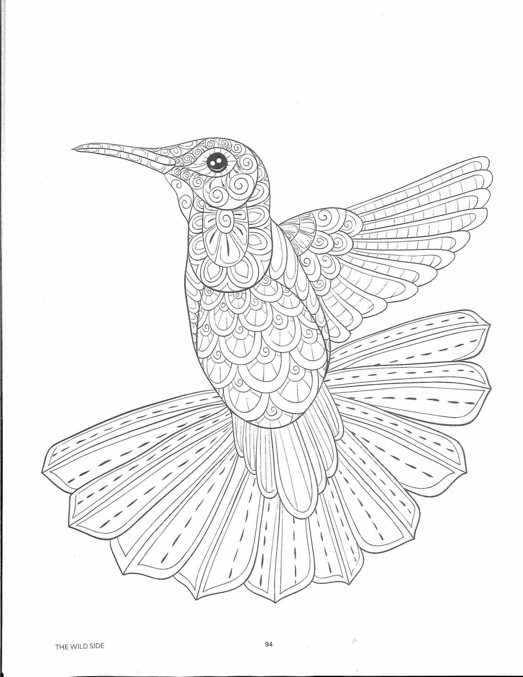 Color Page - Hummingbird